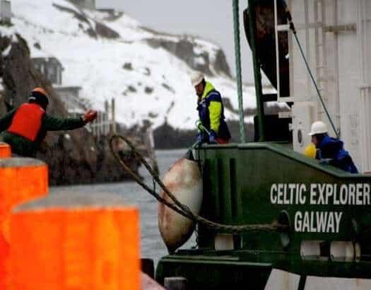 Newfoundland & Labrador Fills Federal Void