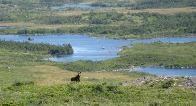Salmonier to Cape Broyle (Part 2)
