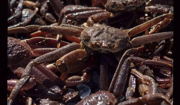 2020 Fishing Season Hits Crab Hard as Cod Remains Critical
