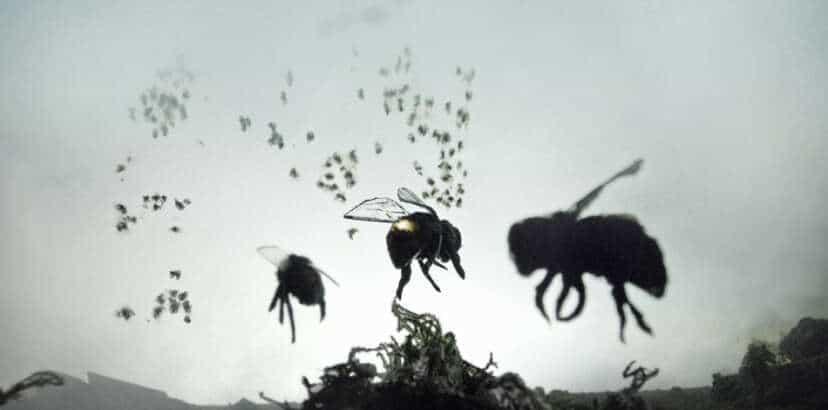 Bee-wildered