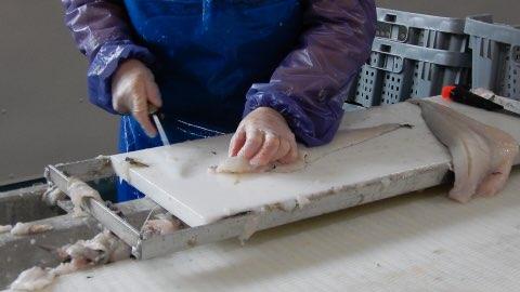 Who Controls Fish Processing in Newfoundland & Labrador?